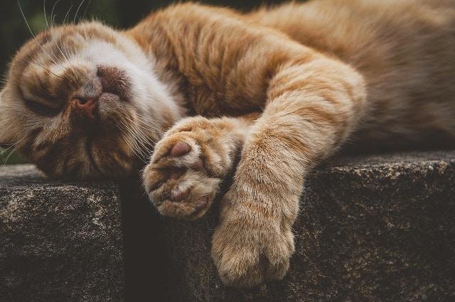 Le chat dort en moyenne 16 heures par jour