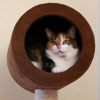 Le chat adore pouvoir se réfugier en hauteur