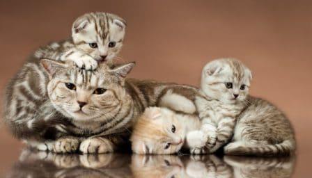 La mère joue un rôle majeur dans l'éducation du chaton