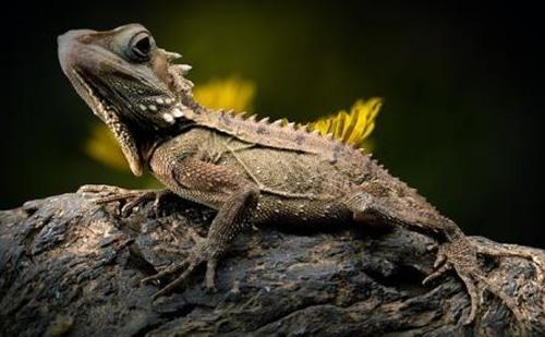 Conseils_NAC_reptiles_09.jpg