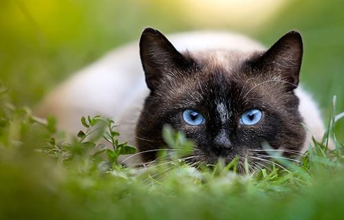 Conseils santé - chats -visite annuelle de santé