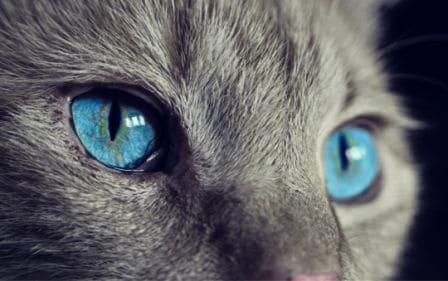 Conseils santé - chats-yeux