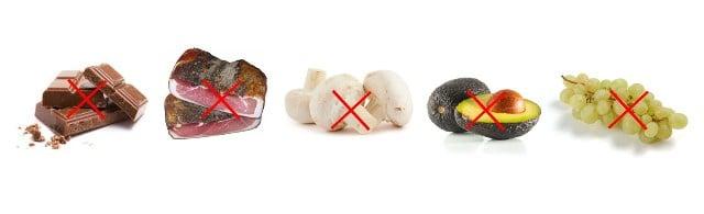 Conseils santé chiens -aliments interdits