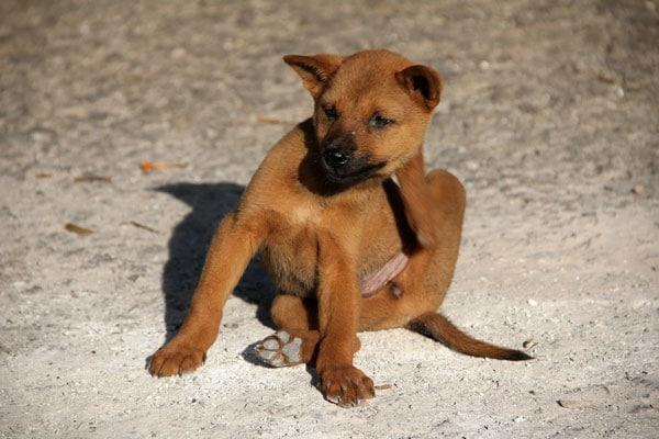 Conseils_chiens_parasites-1.jpg