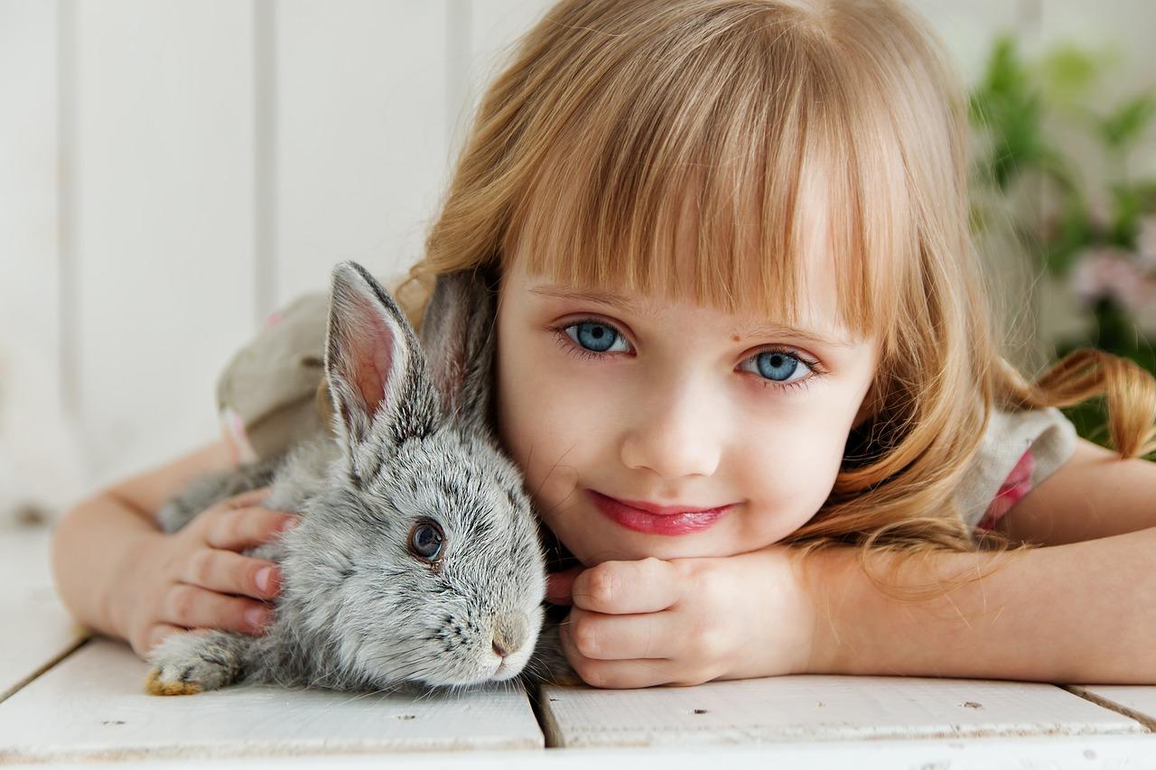 Midivet - Conseils santé lapins 2