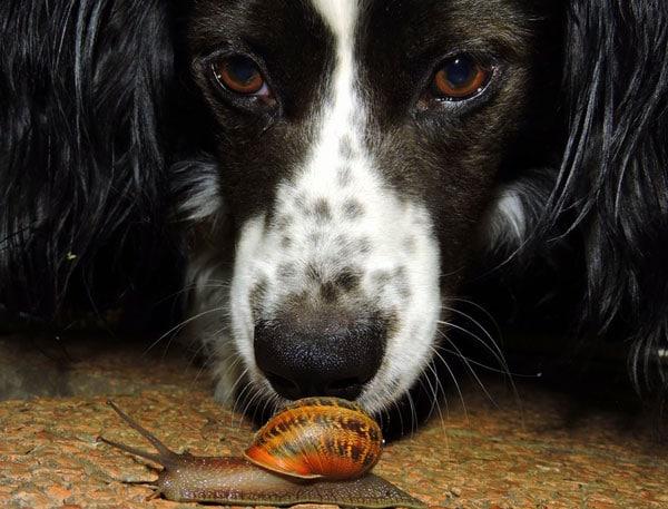 Vétérinaire midivet marguerittes horaires