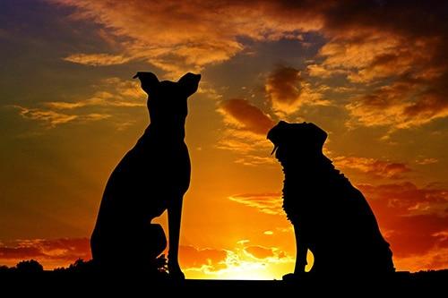 conseils_chiens-14.jpg