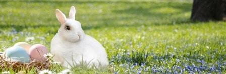 Conseils lapins - stérilisation