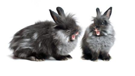 Conseils lapins - les échanges sont nombreux entre congénères.