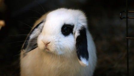 conseils_lapins_sites_veterinaires_15.jpg
