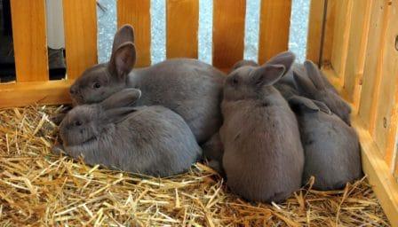 conseils_lapins_sites_veterinaires_16.jpg