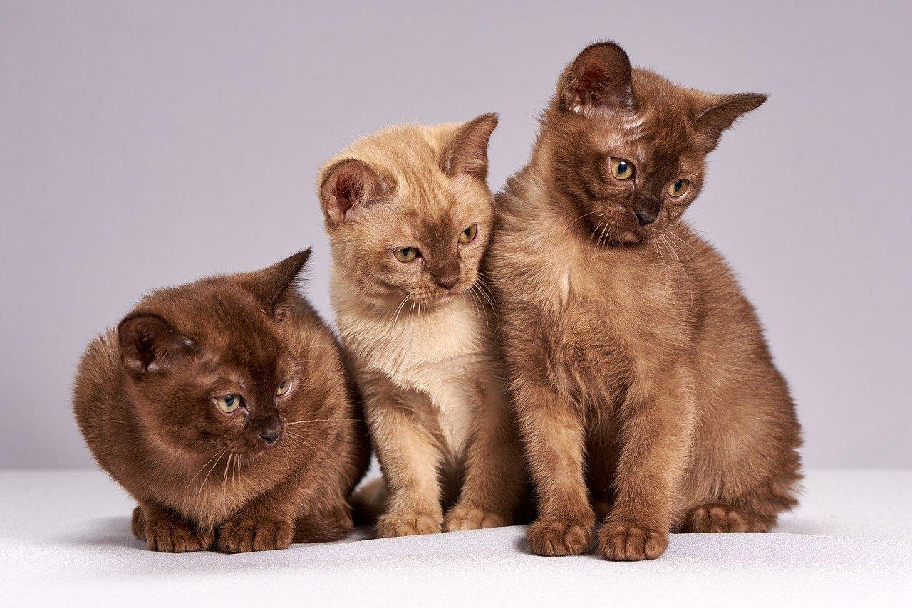 veterinaire-marguerittes-conseils-sante-chats