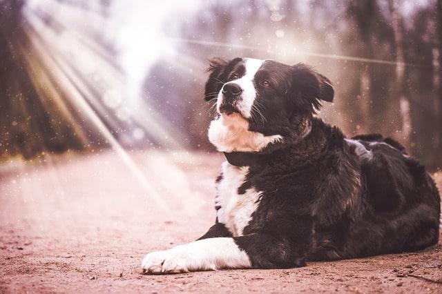 Actualités-vétérinaires-coup-de-chaleur-5.jpg
