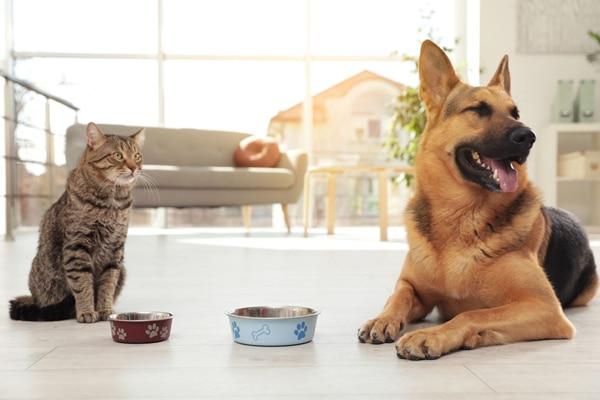 Chien et chats qui mangent dans un dsalon